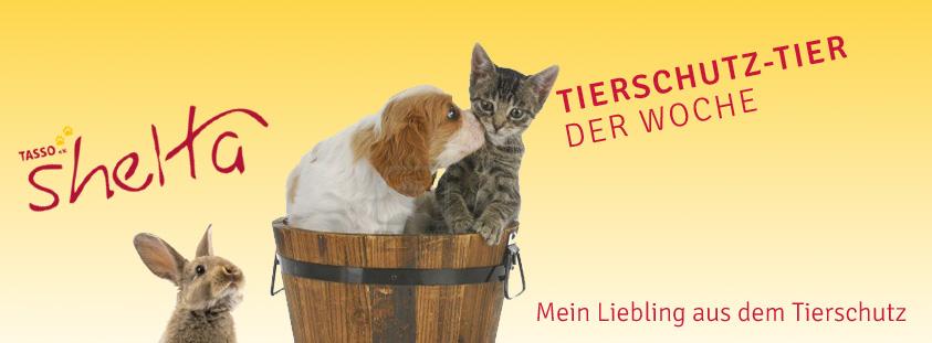 Tierschutztier-der-Woche