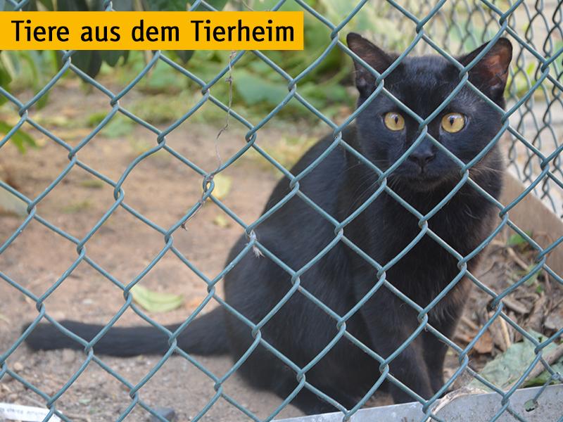 shelta_Tiere aus dem Tierheim_schwarze Katze