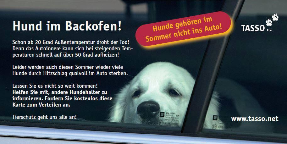 """TASSO Aktion """"Hund-im-Backofen"""""""