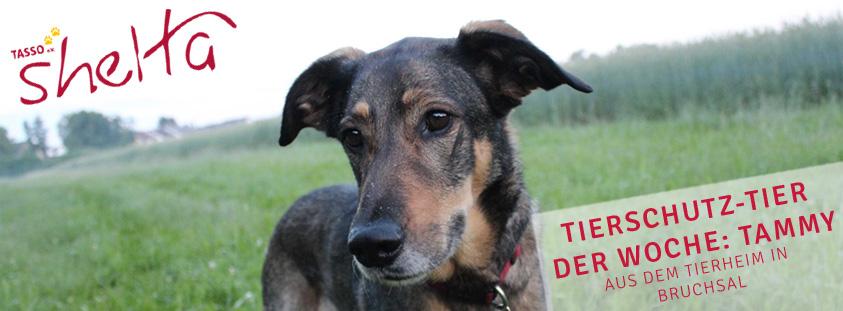 Tammy-tierschutztier-der-Woche