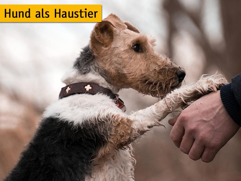 Hund als Haustier_Tipps-Hundehaltung_Rebecca-Schönbrodt-Rühl_Pixabay