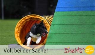 Agility-Training-für-Hunde