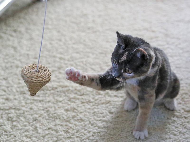 Katzenzimmer - Katze spielt (c) Martin Koll