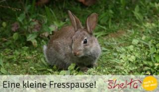 Fresspause-Kaninchen