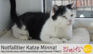 katze-Minna-Notfalltier