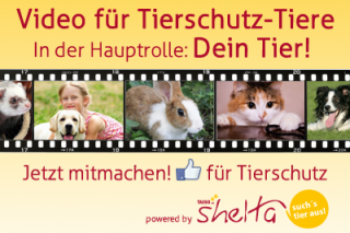 tierschutz-image-video