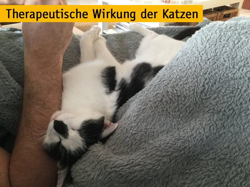 https://blog.shelta.tasso.net/wp-content/uploads/2014/01/Therapeutische-Wirkung-von-Katzen_Maja-Brandt.jpg
