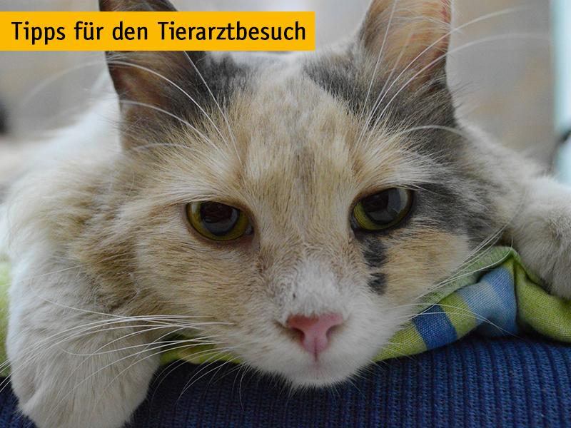 Tipps für den Tierarztbesuch_Katze