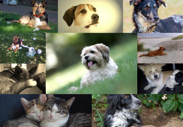 shelta-image-video-finale-bilder-collage