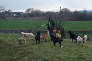 Tierschutz-Stiftung