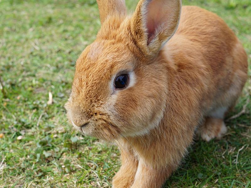 Keine Tier im Osternest-kaninchen auf der Wiese (c) pixabay