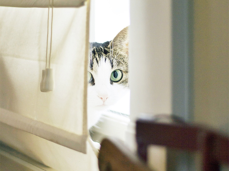 Kippfenster-Syndrom_Katze am Fenster © pixaby.com