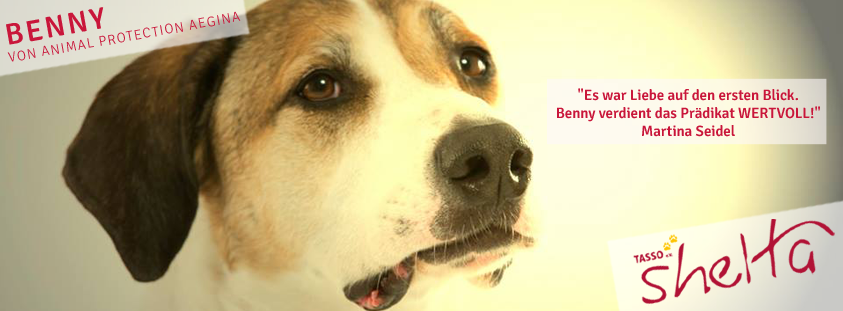 Benny-Image-Video-FB