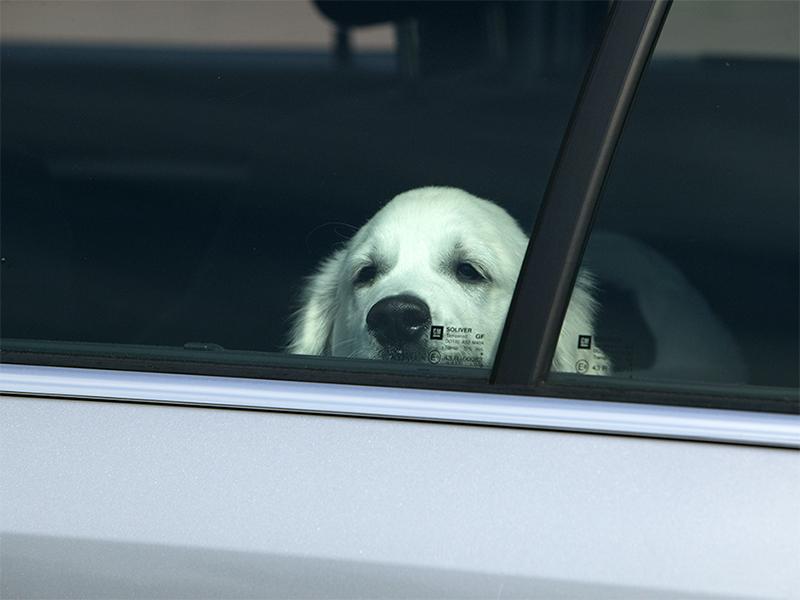 Hitzefalle Auto - Hund im Auto