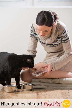 Katze-wird-gefüttert
