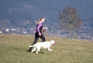 Noah, Labradormix, rennt mit Lisa 4