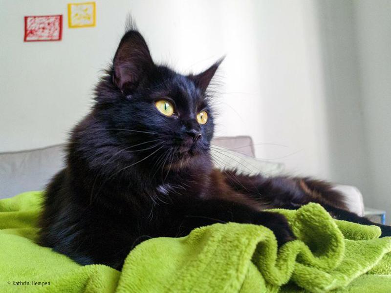 Urlaub ohne Haustier_Katzen bleiben am liebsten Zuhause_Kathrin Hempen