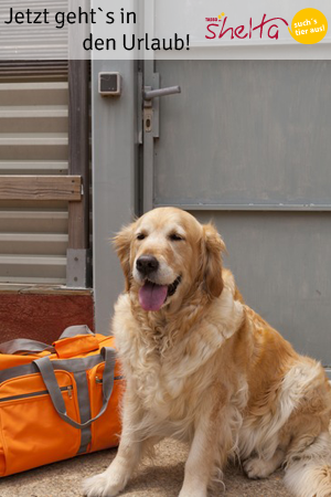Hund-im-Urlaub