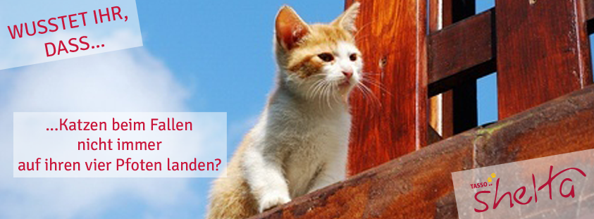 Faktenkarte-Katzen-landen-nicht-immer-auf-vier-pfoten