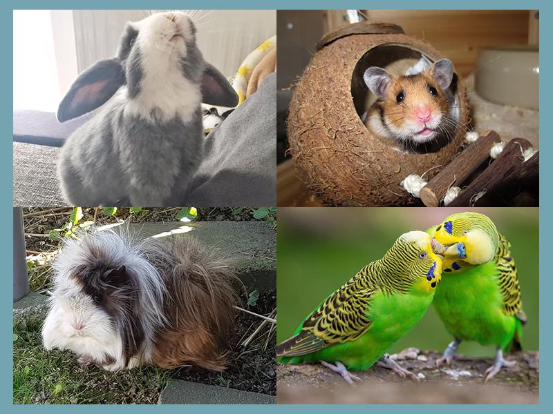 Kleintierhaltung-Kaninchen, Hamster, Meerschweinchen, Wellensittich