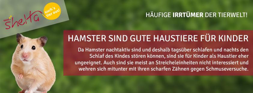 shelta-irrtuemer-tierwelt-02-hamster-haustiere-kinder