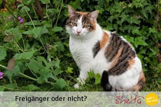 Katzen Freigänger oder nicht