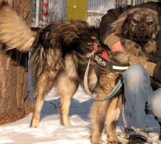 Hund Ahadi sucht dringend ein Zuhause Tasso shelta