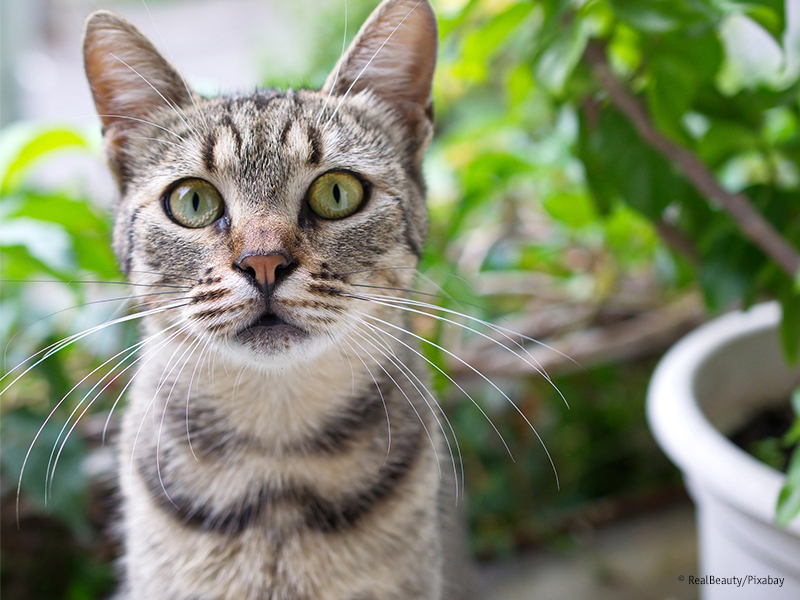 Katze mit Zimmerpflanzen_RealBeautyPixabay