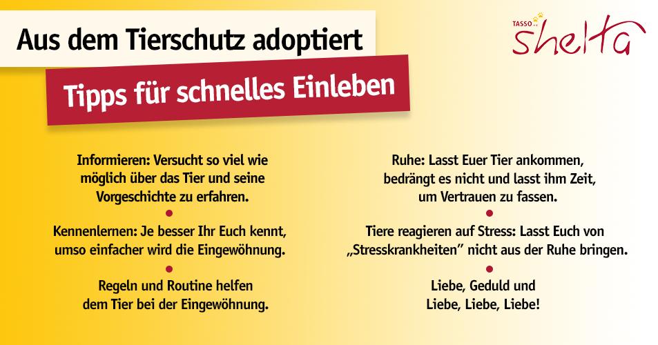 Grafik_Tierschutztier Eingewöhnung_Tipps_shelta