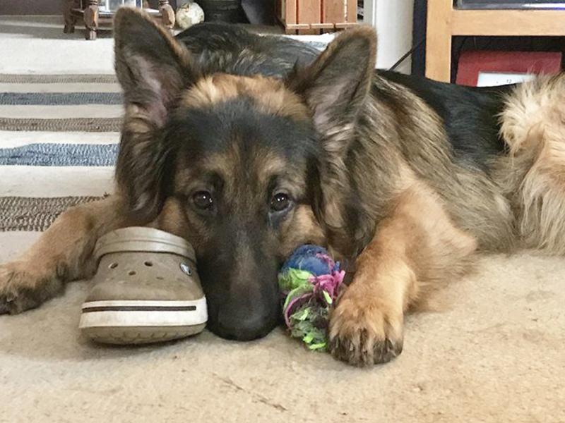 Tierschutztier einleben_Hund liegt auf dem Boden_(c) Alexandra Folkers_shelta