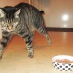 Katze Lissy Diabetes 2