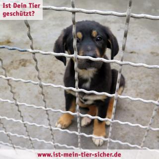 Tierheimtier_1