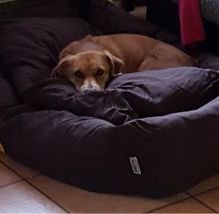 Hündin Peanut hat über shelta ein Zuhause gefunden