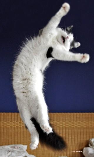 Die blinde Katze Lulu lebt fröhlich und zufrieden bei Lars Krüger in Ottensen