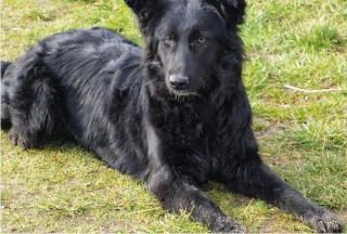 Hund Xena hat über shelta ein neues Zuhause gefunden
