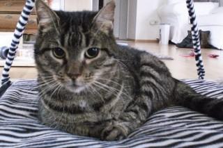 Katze Angela Notfalltier sucht Zuhause Tasso shelta