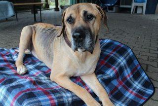 Hund Apollo sucht Zuhause Tasso shelta