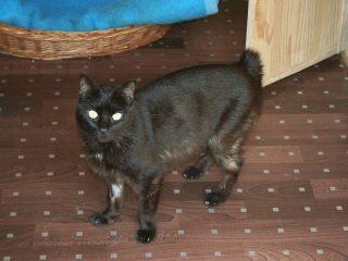 Katze Notfalltier sucht Zuhause Tasso shelta
