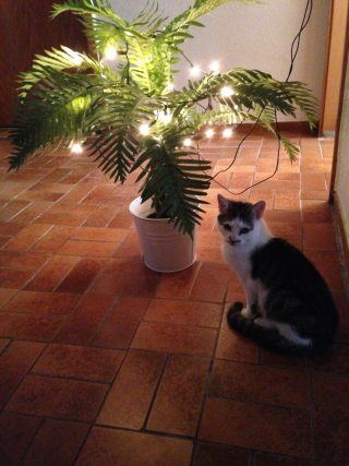 Katze Tiffany