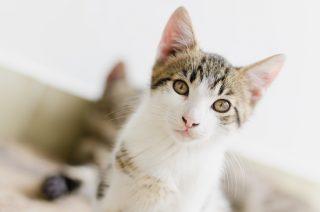 Katze Clickertraining