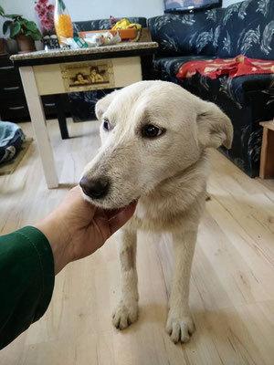 mischlingshund-snejka-sucht-zuhause-tasso-shelta
