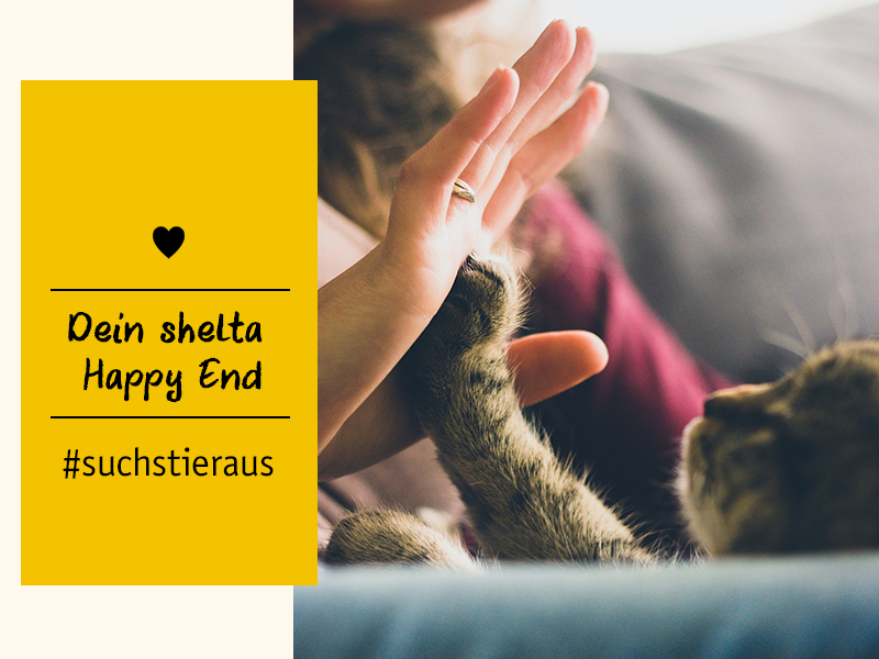 Tierschutz-Tiere shelta Happy End