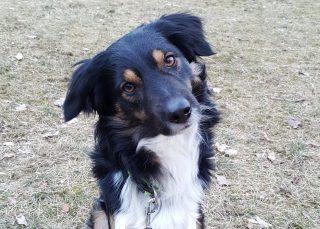 Hund Liam über shelta Zuhause gefunden