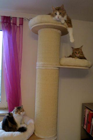 Happy End für Katze Truddy Tasso shelta 2