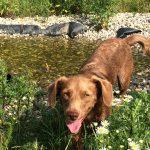 Hund Balu sucht Zuhause Tasso shelta 3