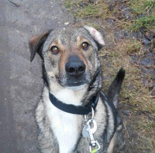 Hund Theo hat über shelta ein Zuhause gefunden