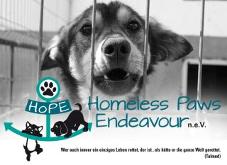 homeless paws endeavour bild mit logo