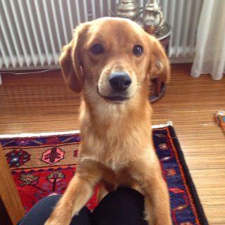 Hund Buddy hat über shelta Zuhause gefunden