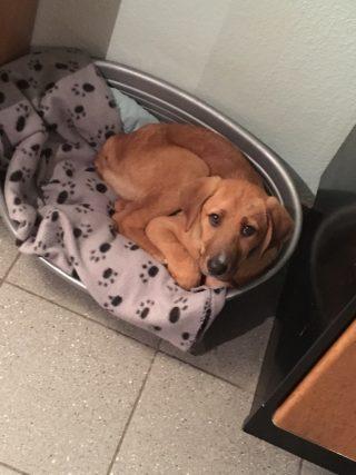 Hund Nino über shelta Zuhause gefunden