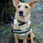 shelta Online-Tierheim Fotoaktion: Mischlingshund Linos | © Alina Kremer